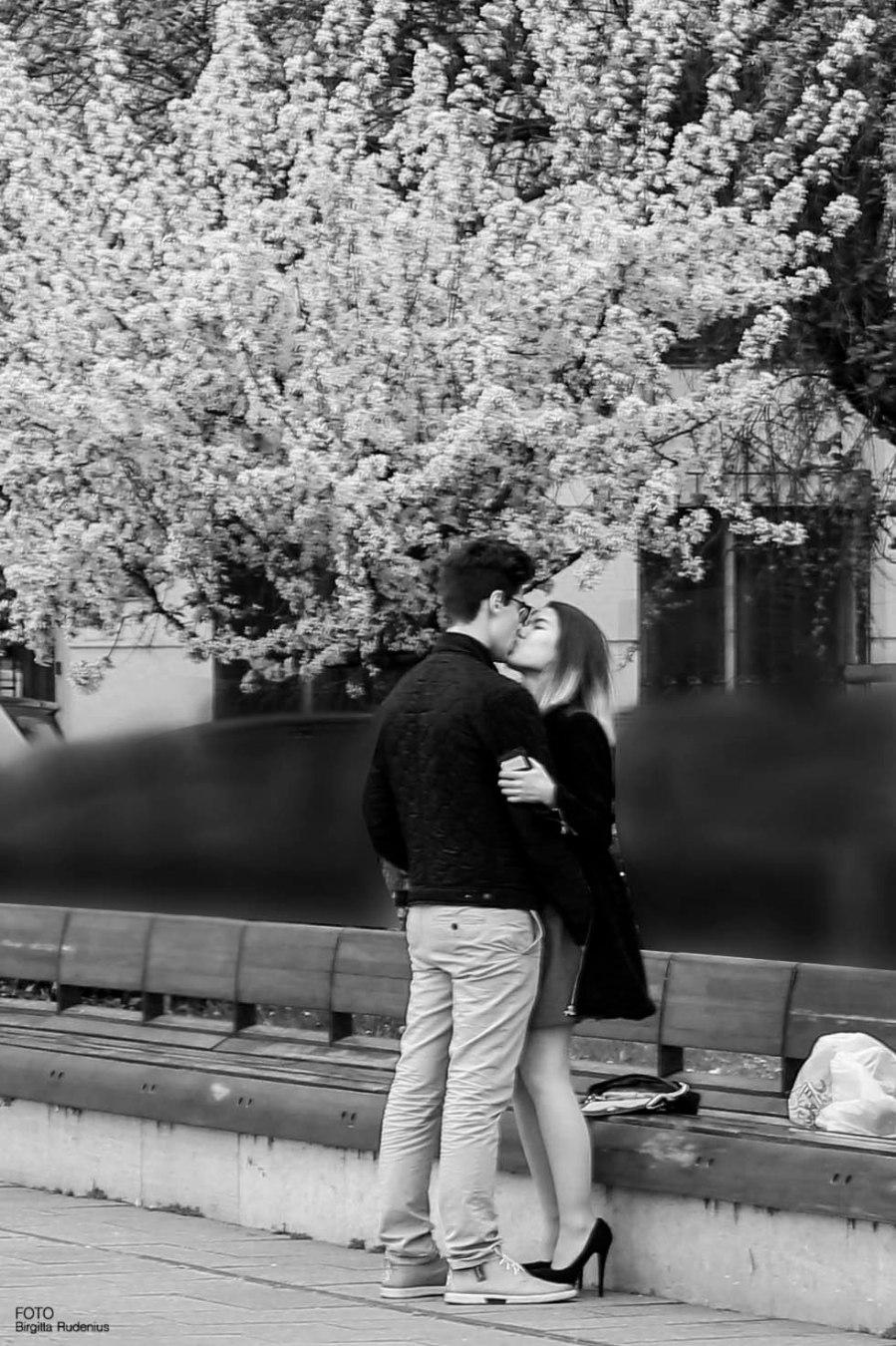 PiPP - Love Budapest