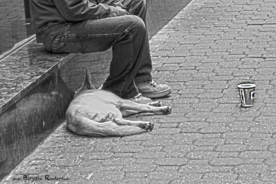 people_20130528_dog