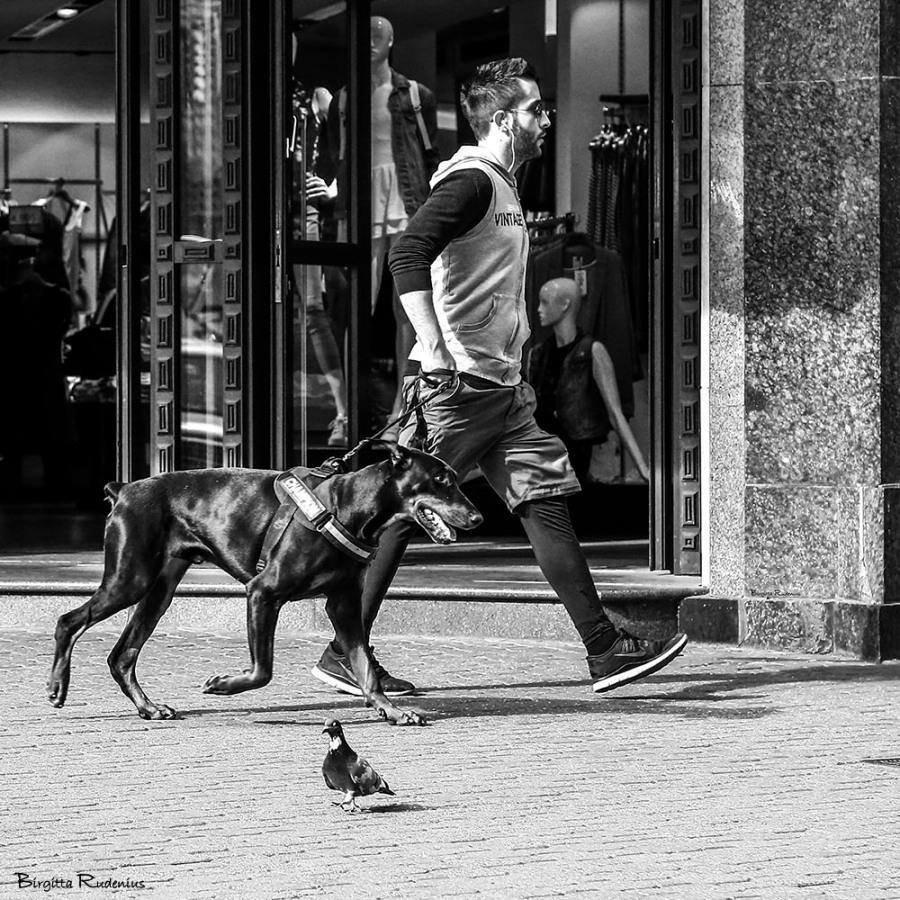 PiPP_20150325_dogwalkdove